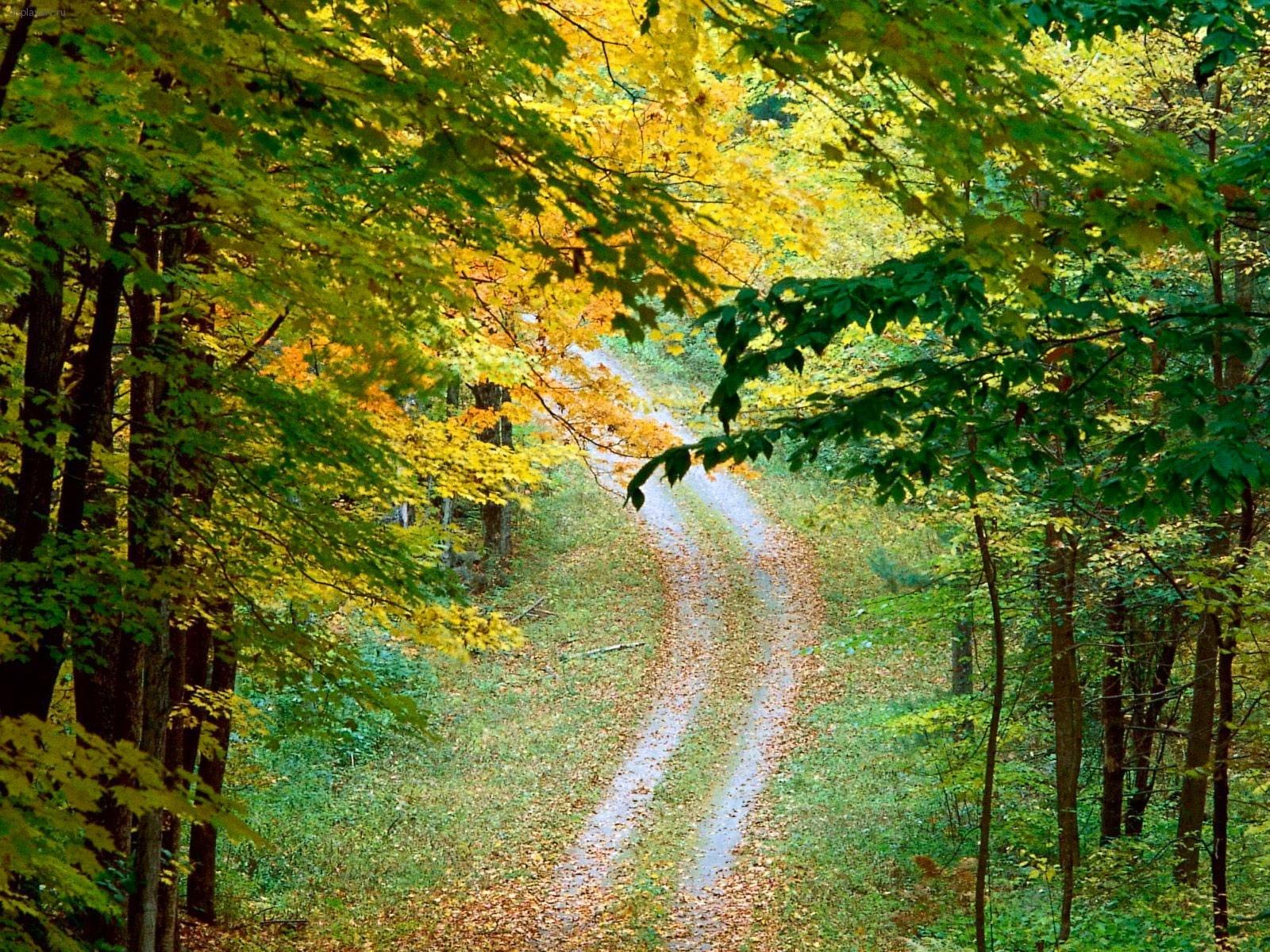 Открытки ранняя осень, картинки