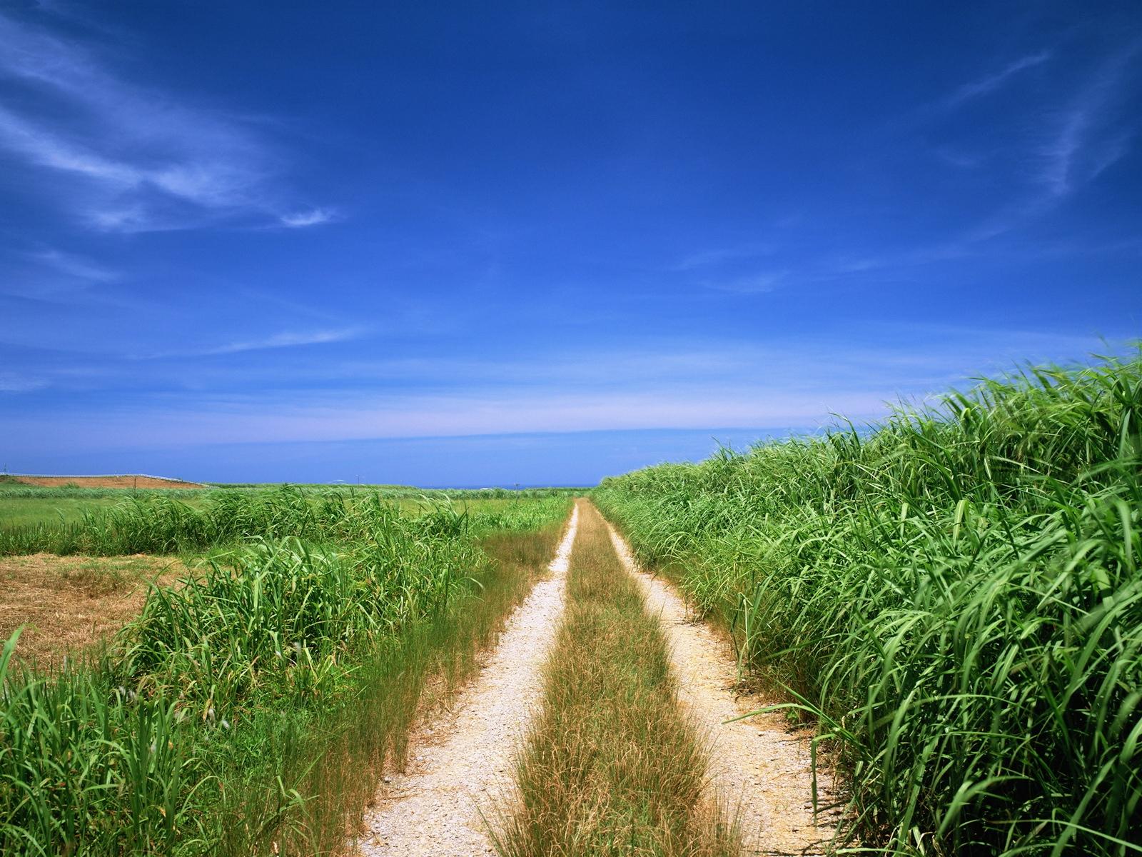 Дорога через зеленое поле  № 2604442  скачать