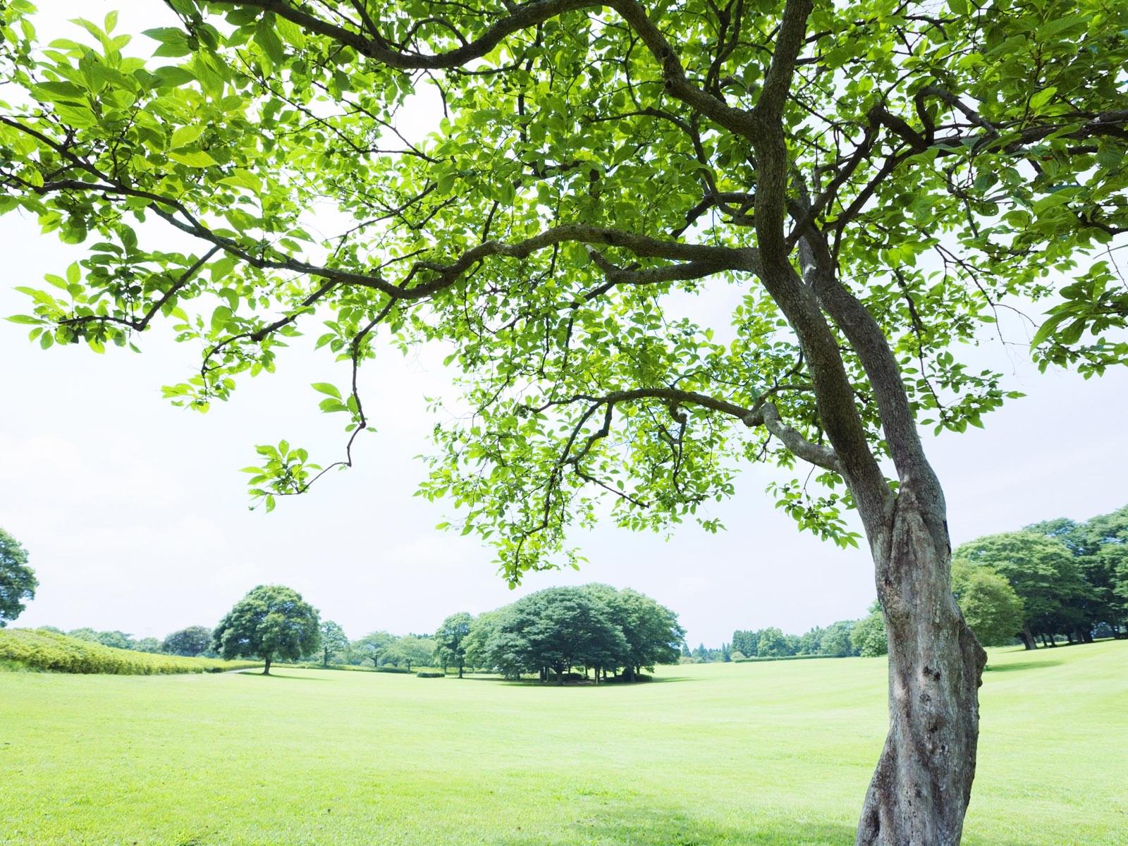 Под деревом картинки