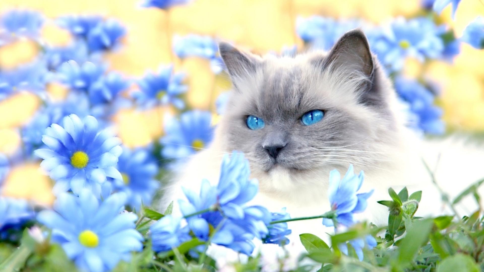 Кот сиамский кот цветы лужайка загрузить
