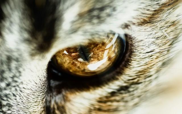 фото глаза кошки 8. фото глаза кошки.
