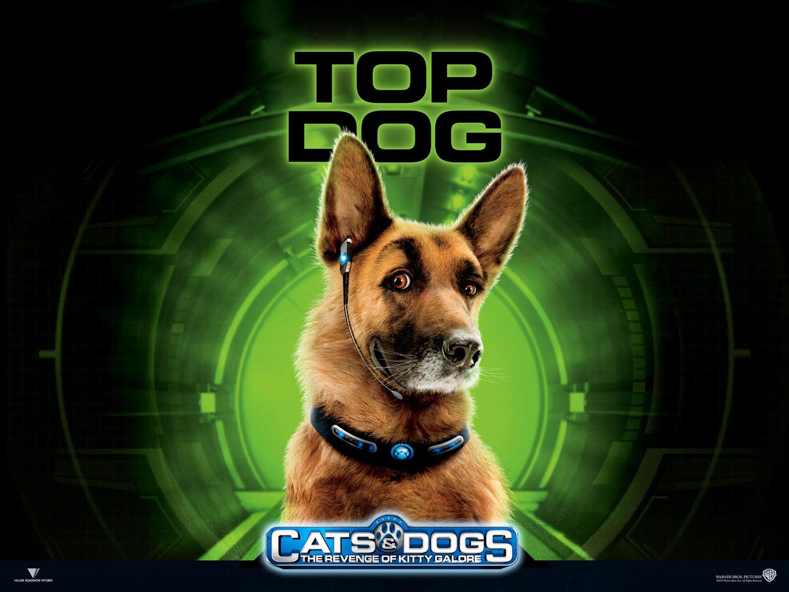 Картинки кошки против собак месть собака бадди